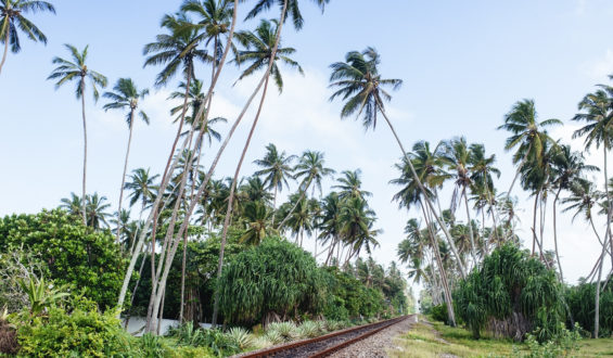 Follow your Inner Compass to Sri Lanka