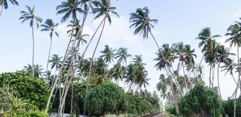 Follow your Inner Compass to Sri Lanka