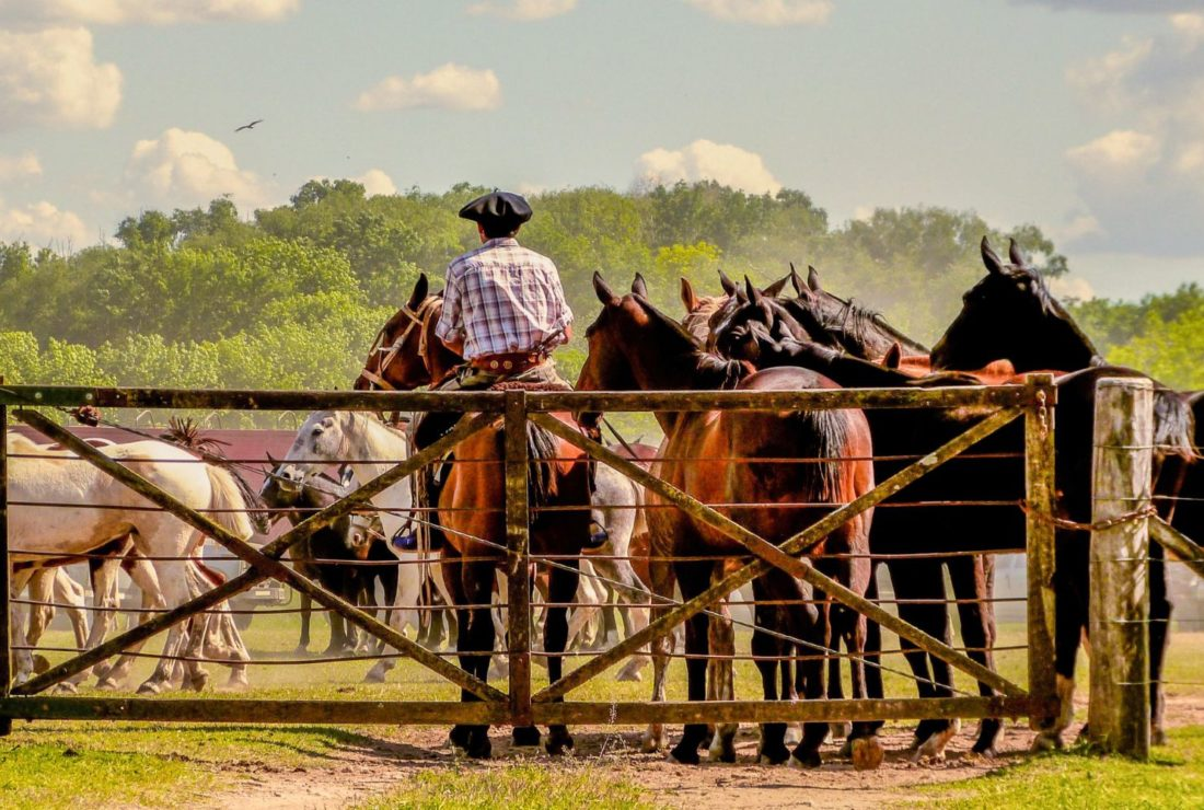 Traditional gaucho's day in San Antonio de Areco, Argentina