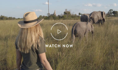Walking with elephants in Botswana