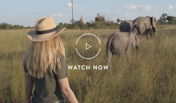 Walking with elephants in Botswana