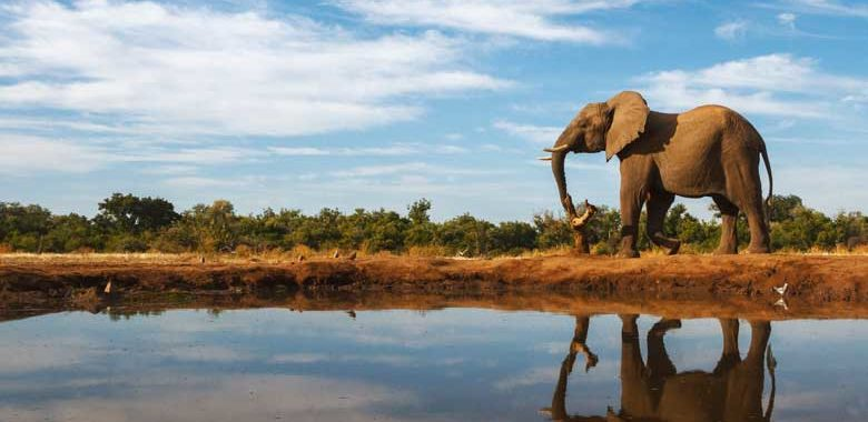 Luxury honeymoons in Botswana
