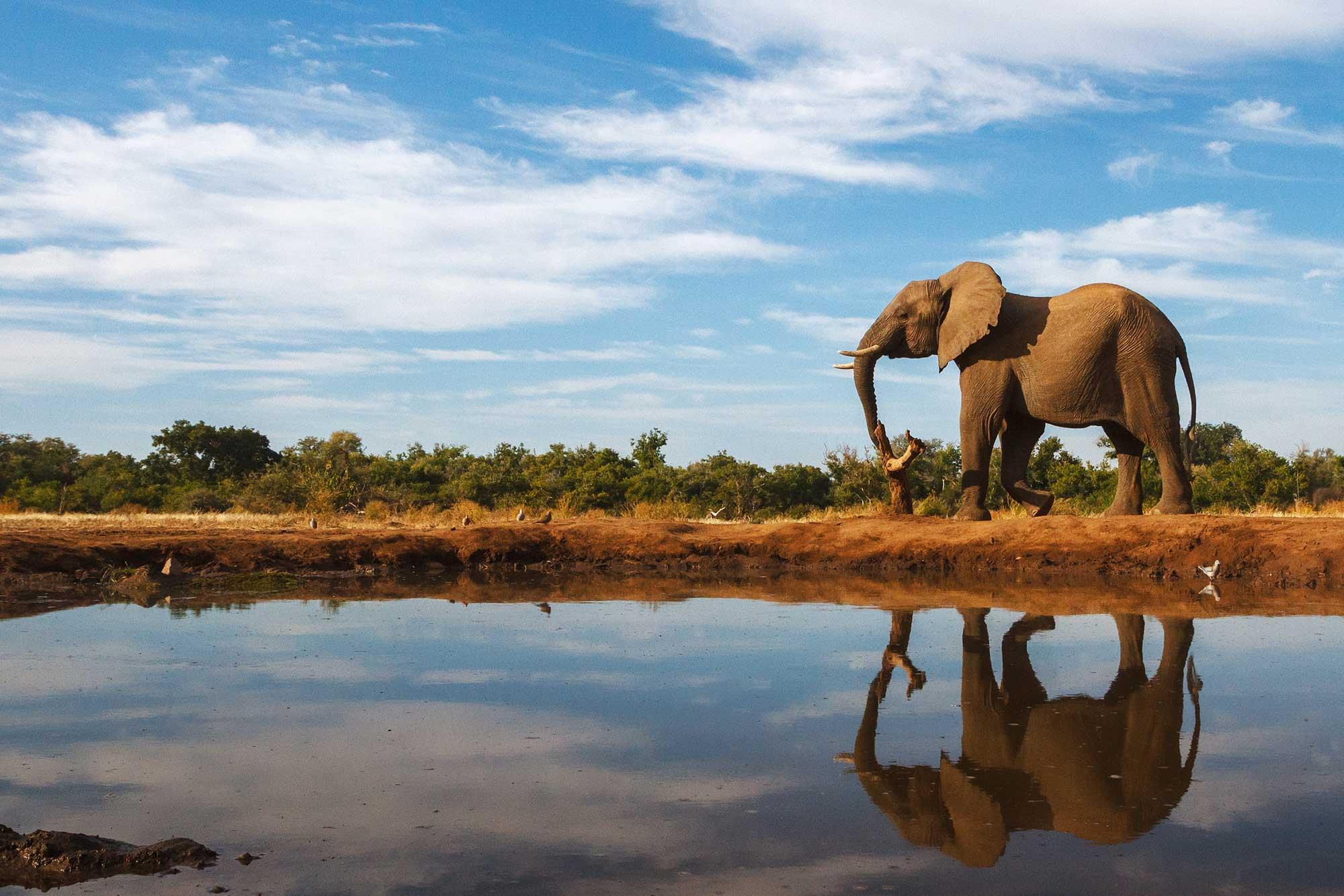 Luxury honeymoons in Botswana