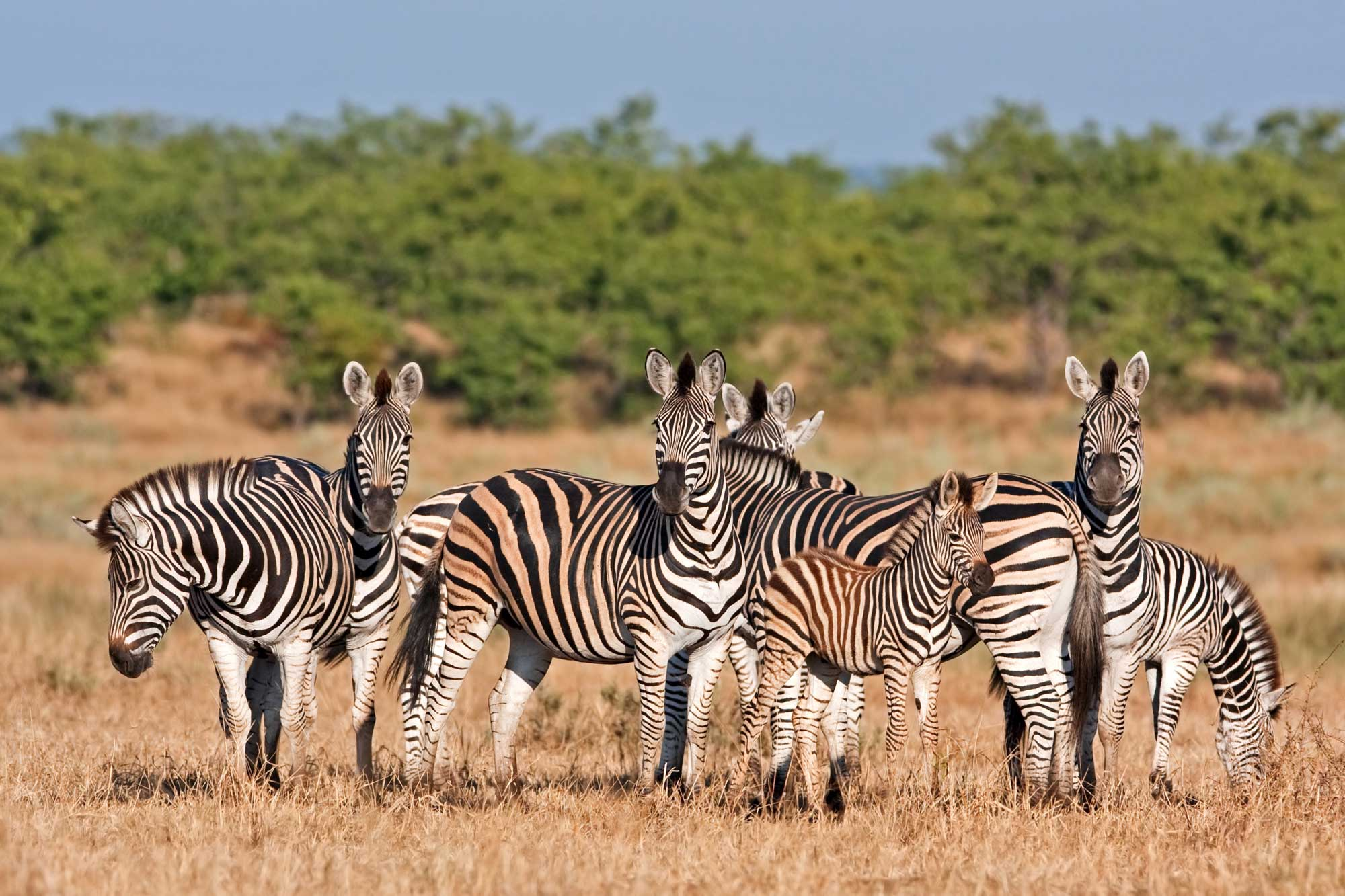 Safari honeymoons in South Africa