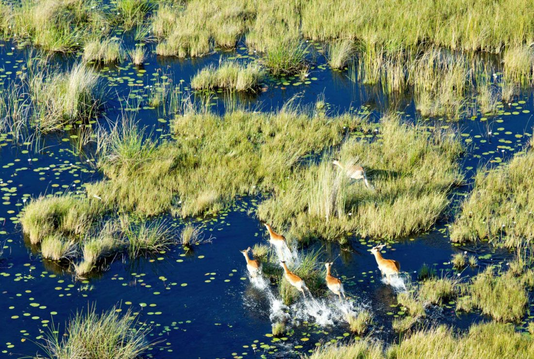Exploring the Okavango Delta by helicopter