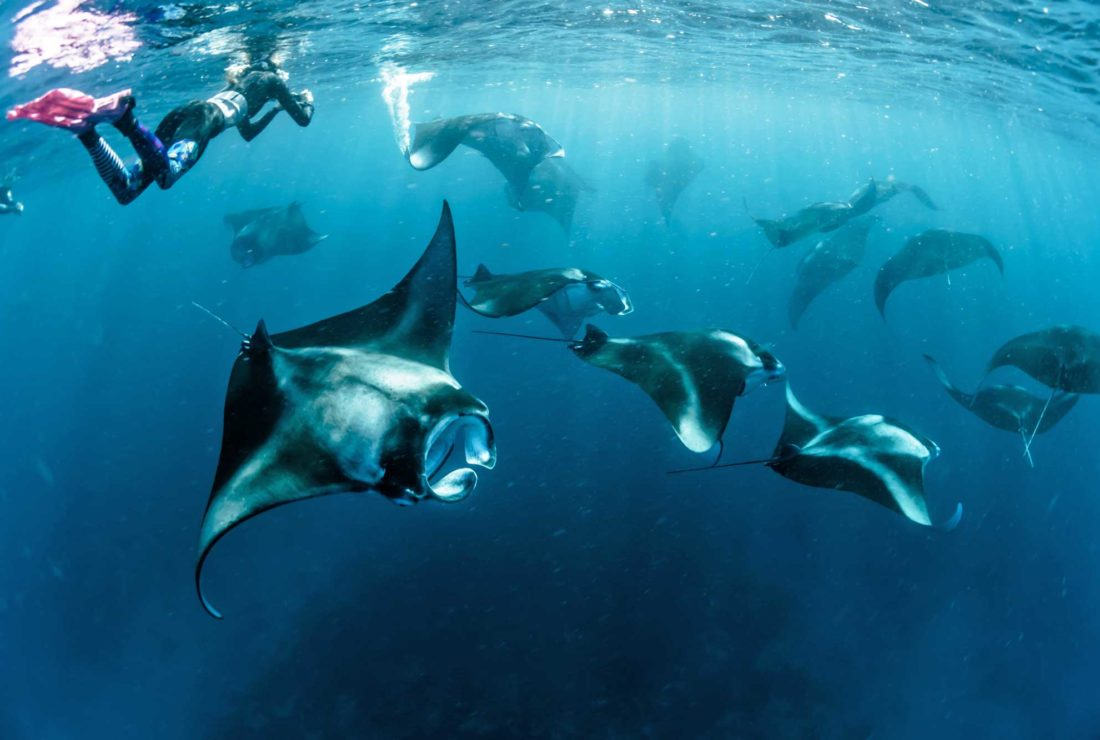 Snorkelling with manta rays in the Madlives