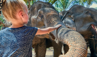 Child feeding elephant in Thailand