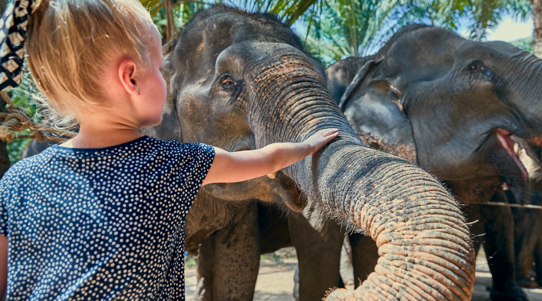 Child feeding elephant in Thailand
