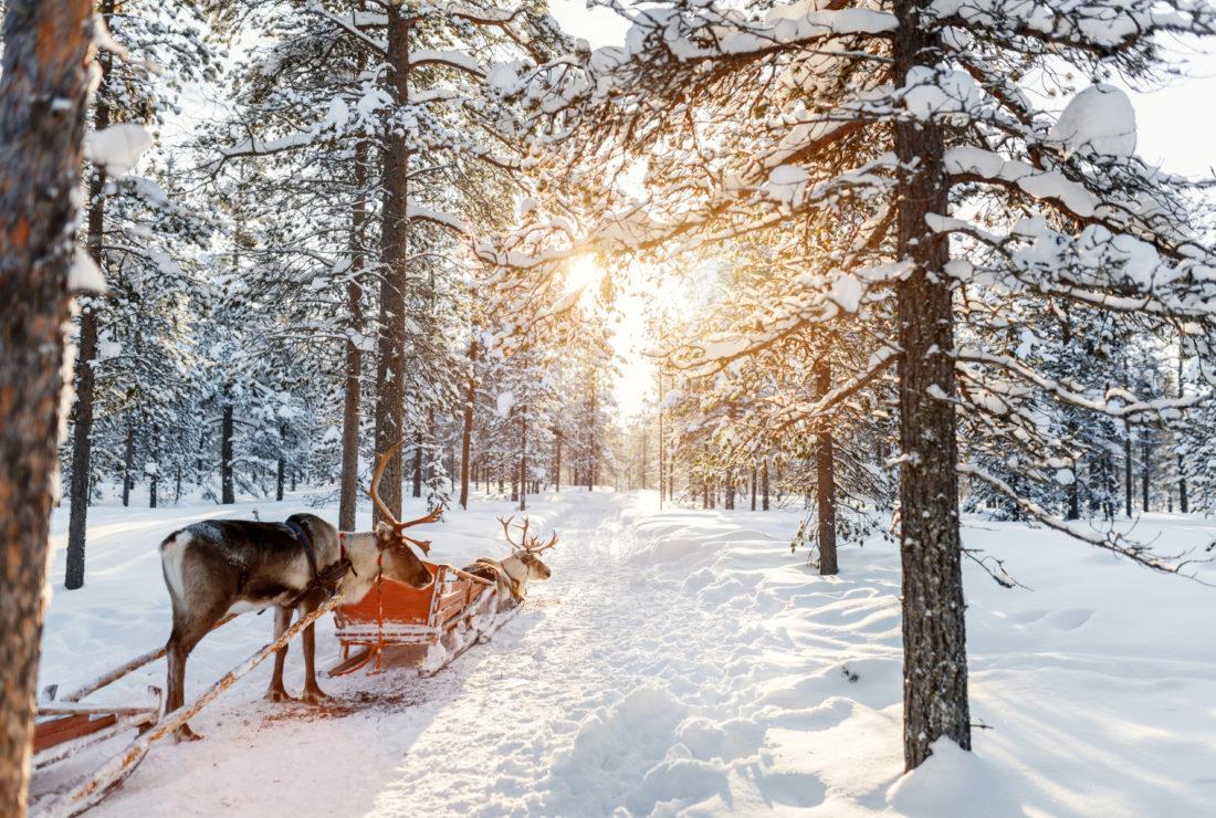 Finland reindeer sleighing