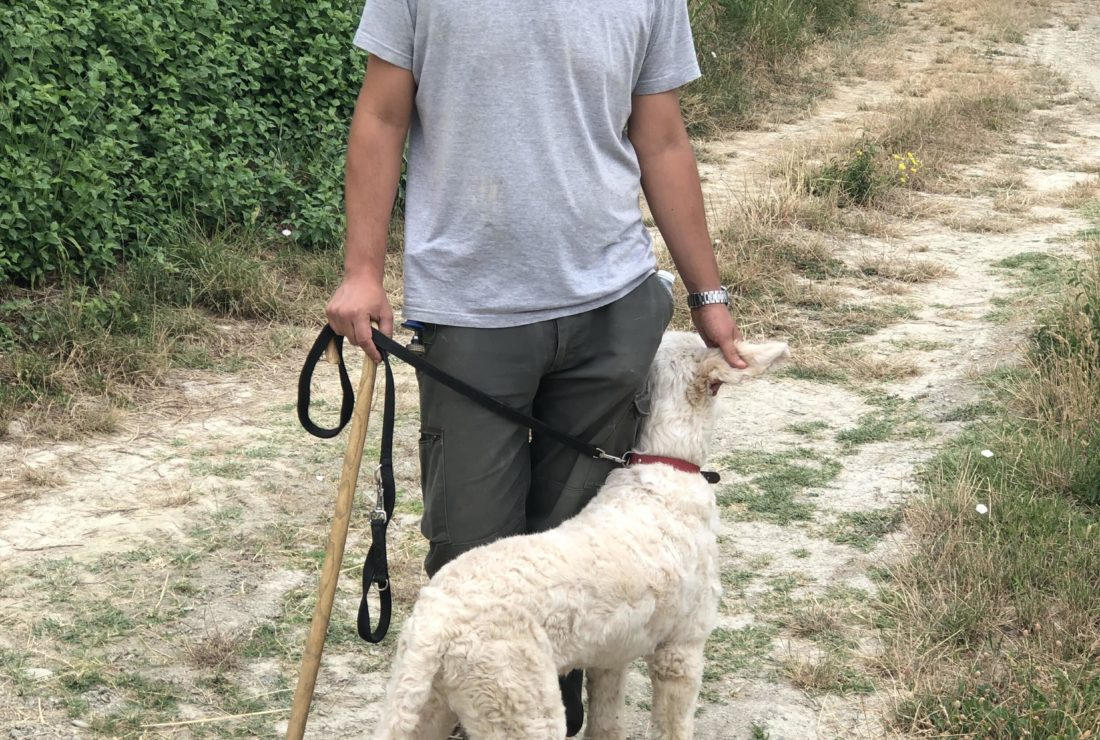 A local truffle hunter and his dog