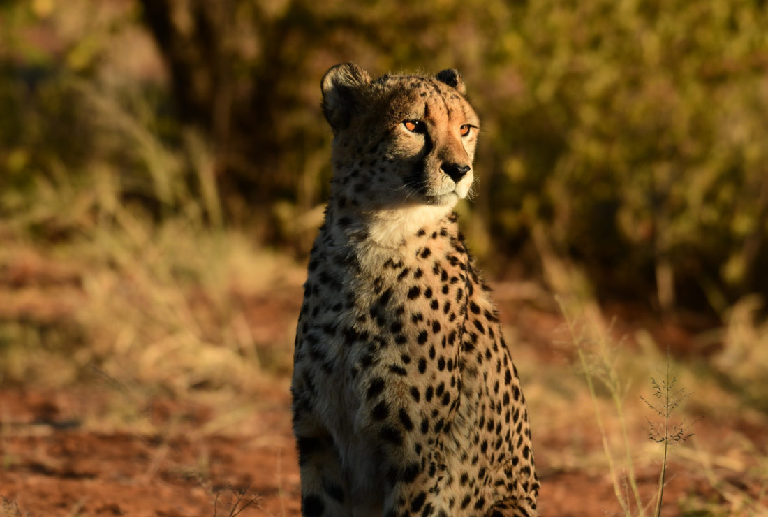 Track Cheetahs, AfriCat Foundations