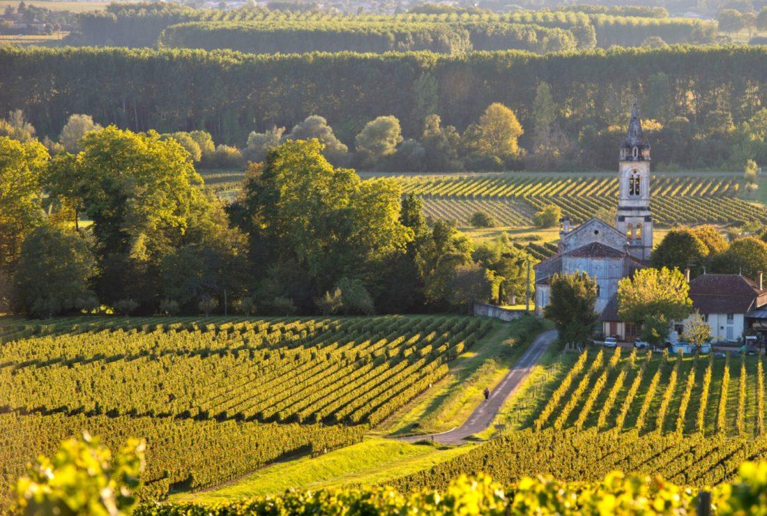 sauternes vineyard scenery near Bordeaux